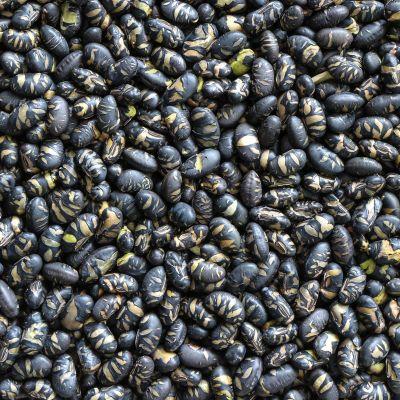 Zwarte Sojabonen Geroosterd